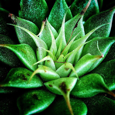 How To Shoot Macro Photography With Your Phone | Mobile Macro