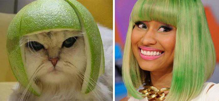 Um gato que parece Nicki Minaj
