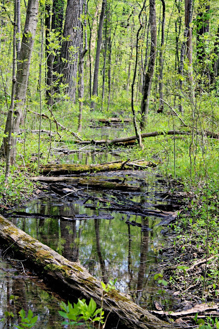 Logs and wetland at Ryerson