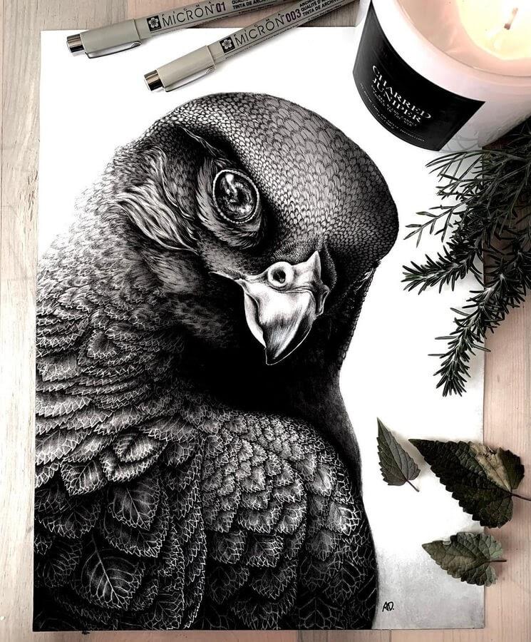 01-Falcon-Alyse-Dietel-www-designstack-co