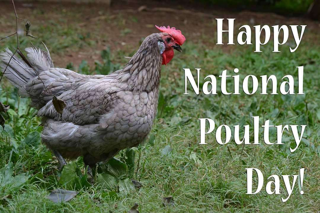 National Poultry Day Wishes Images