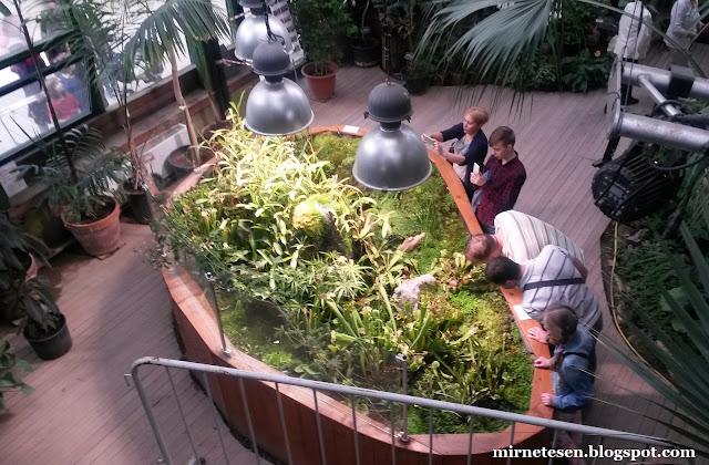 Аптекарский огород в Москве: хищные растения