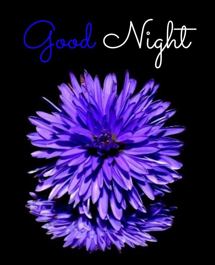 Good Night Blue Flower
