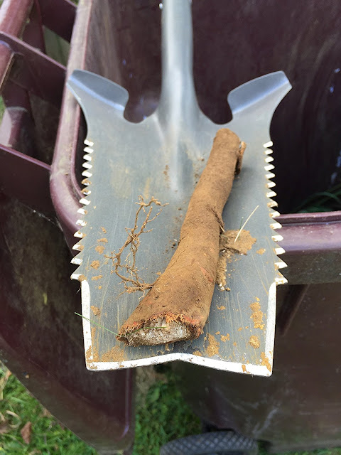 Digging Up Roots Is Easy Task, If You Have This Radius Garden Root Slayer  Shovel