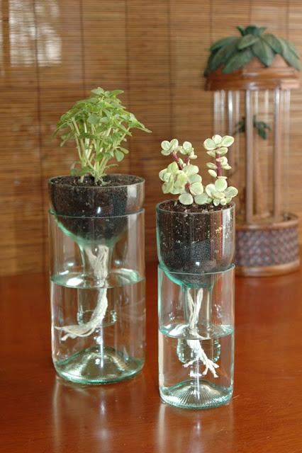cara membuat tanaman hidroponikdari botol bekas