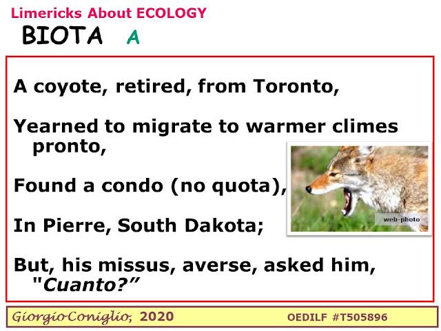 limerick; multiverse; coyote; Canis latrans; retiree; Canada; United States; South Dakota; Toronto; Giorgio Coniglio