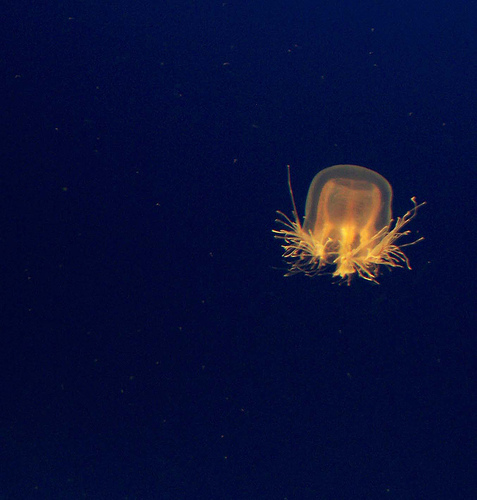 Jellyfish Protection