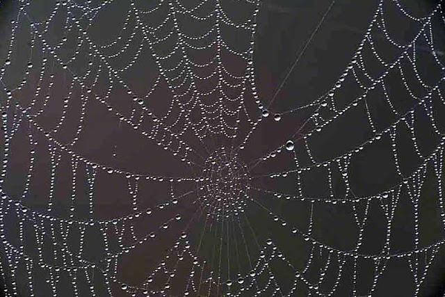 cobwebs, Okinawa, rain