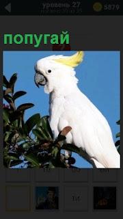 На фоне голубого безоблачного неба на ветке дерева сидит попугай белого цвета с хохолком на голове желтого цвета