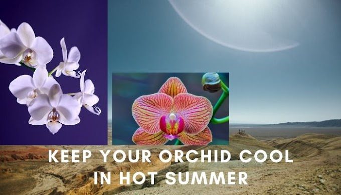 Keep your Orchid Cool in hot Summer