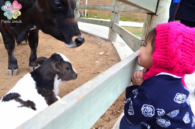 tatá resort caeté , resort mg, viajando com filhos, saindo da rotina com filhos, tempo de qualidade com filhos, fazenda com filhos, leite ao pé da vaca