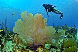 Dive Website Indonesia