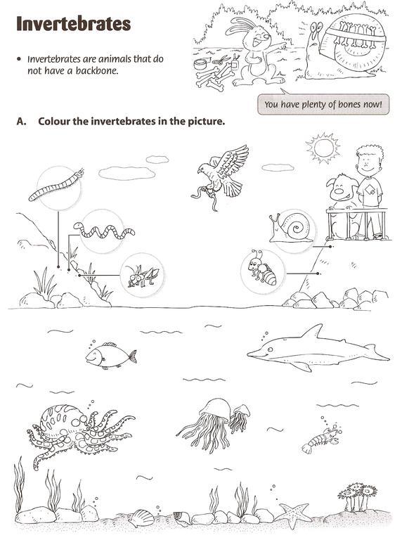 Let's go!: Invertebrate Animals