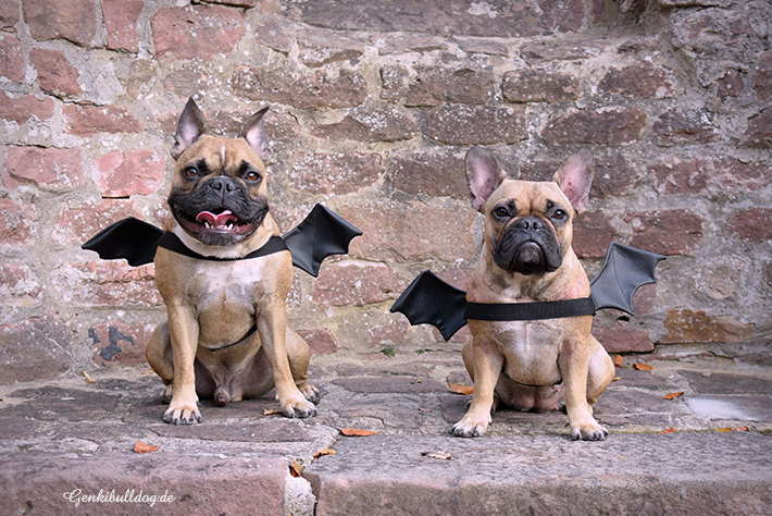 Monatspfoto Oktober: Halloween