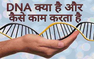 DNA क्या है और कैसे काम करता है , DNA: Definition, Structure & Discovery | What Is DNA?