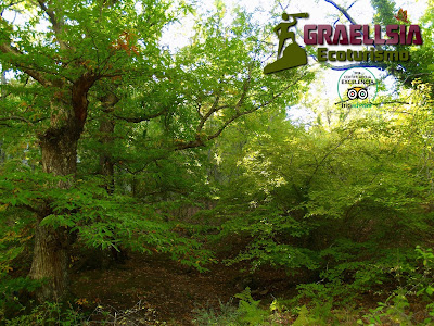 Bosque de la Herrería