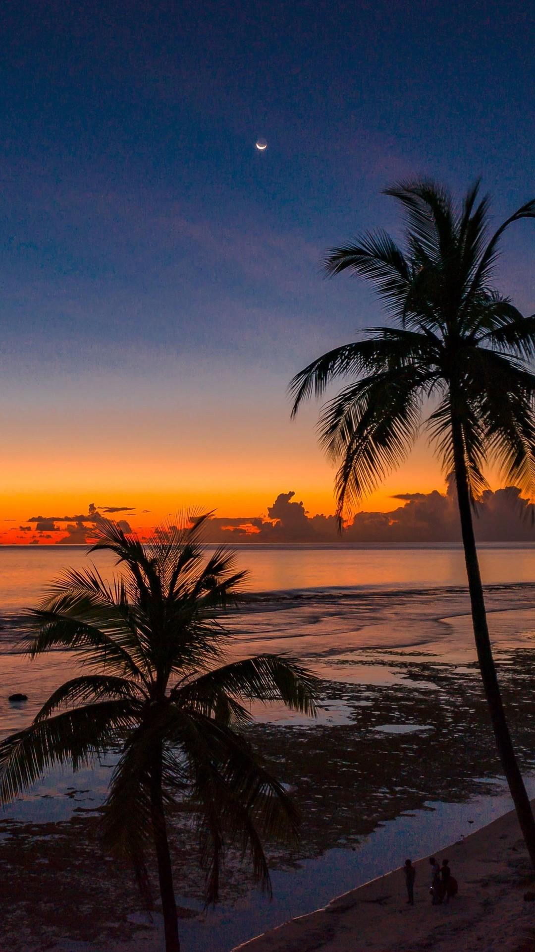 Beach Coconut Trees Hd Wallpaper