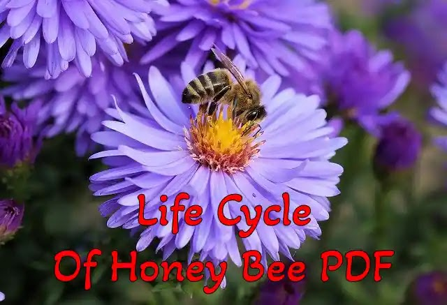 Life Cycle Of Honey Bee PDF Free Download