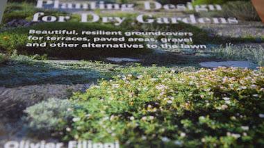 Alternativas al césped tradicional en 'Planting Design for Dry Gardens' de Olivier Filippi