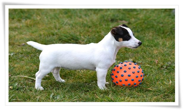 tools for dog training