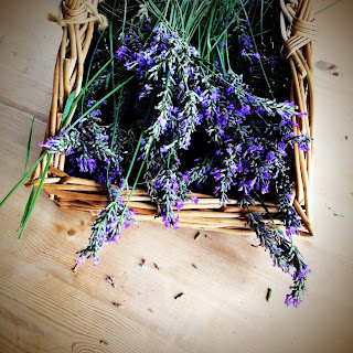 Lavender in basket scattered