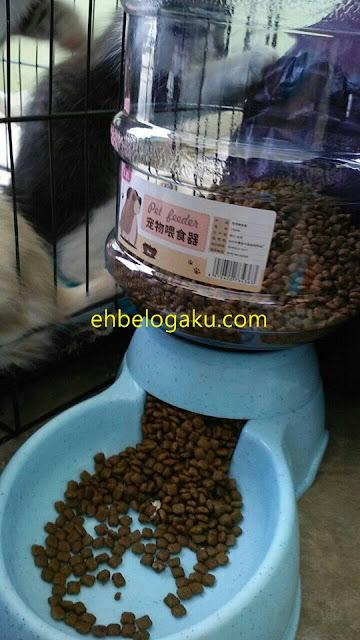 pet feeders, bekas makanan kucing,