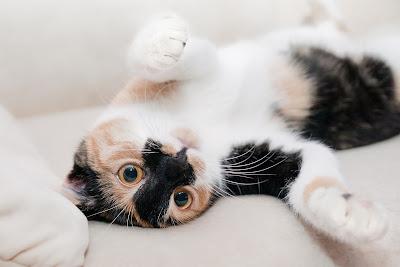 Kamu Harus Tau Ternyata Seperti Ini Cara Merawat Kucing Yang Benar
