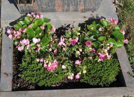 Planter på gravsted