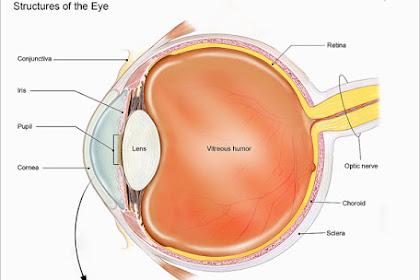Apa itu Kornea Mata, Bagian & Fungsinya, dan Penyakit pada Kornea