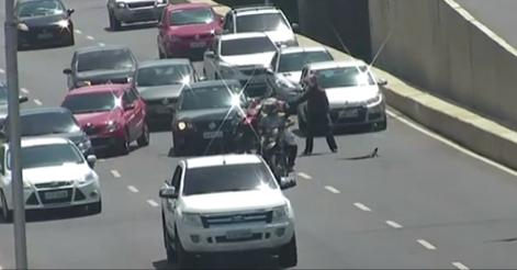 Motoristas param a Via  para salvar réptil  em Recife/PE