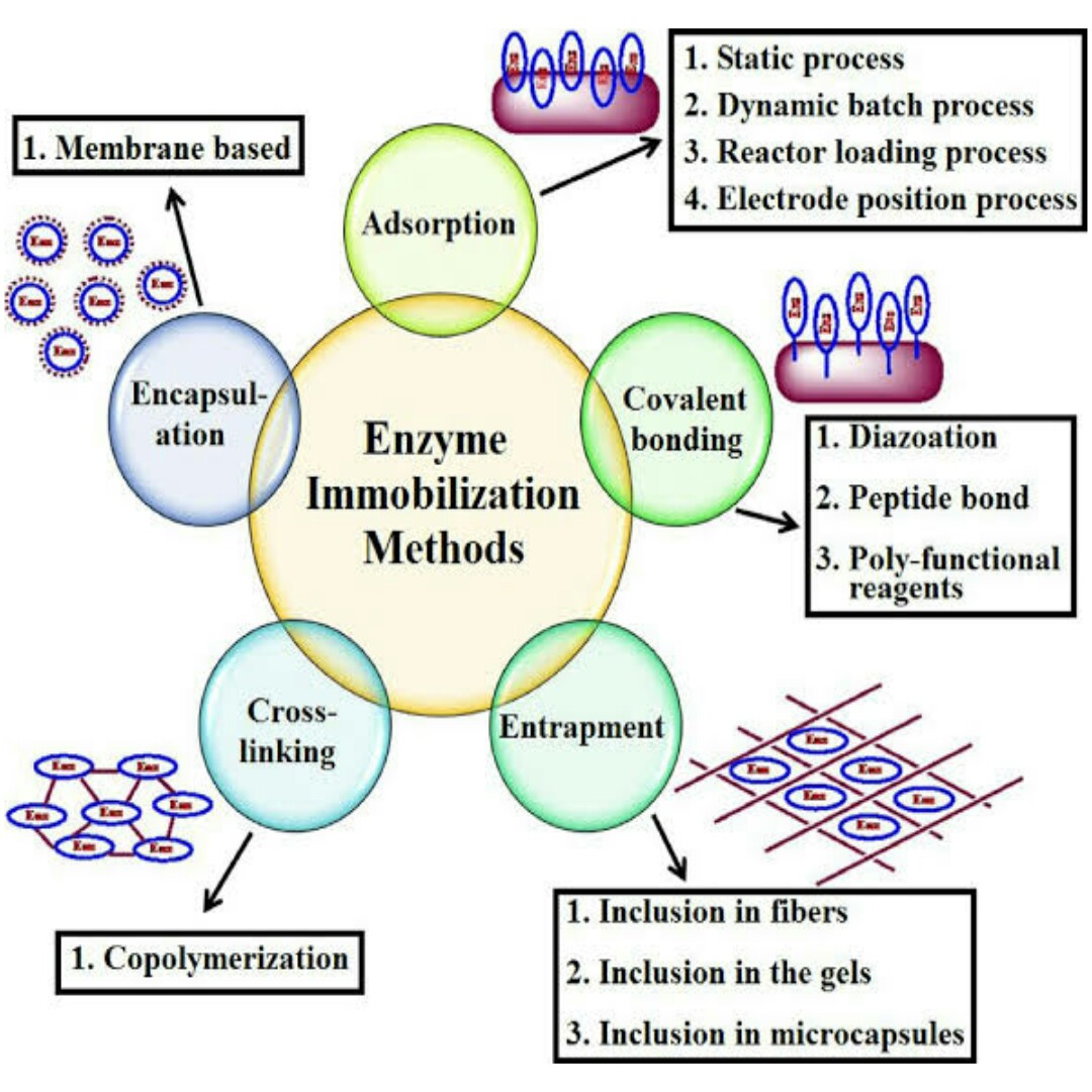 A Seminar On The Application Of Enzymes For Biocatalyst