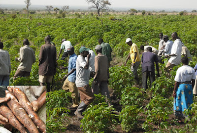AGRICULTURE OPPORTUNITIES IN PLATEAU STATE PLATEAU 2BSTATE4