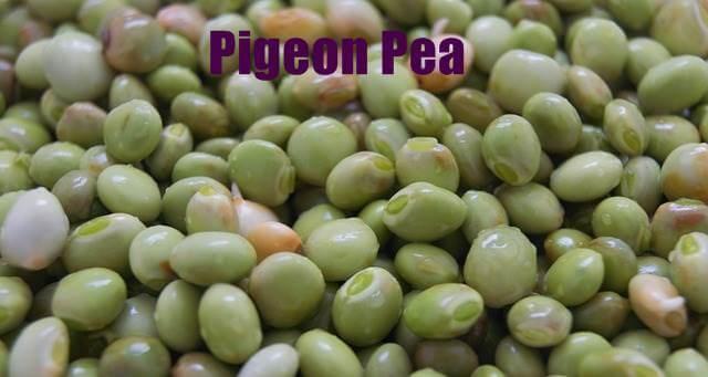 Pigeon pea in hindi