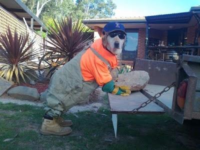 Im Garten arbeiten - lustiger verkleideter Hund zum lachen