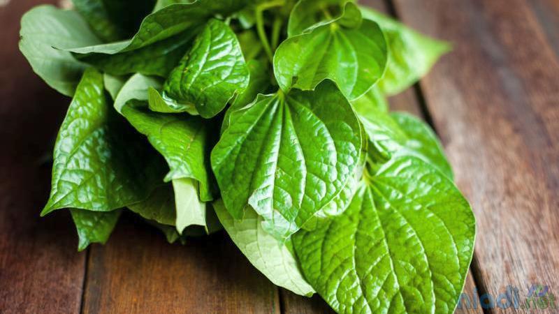 manfaat daun sirih untuk luka bakar