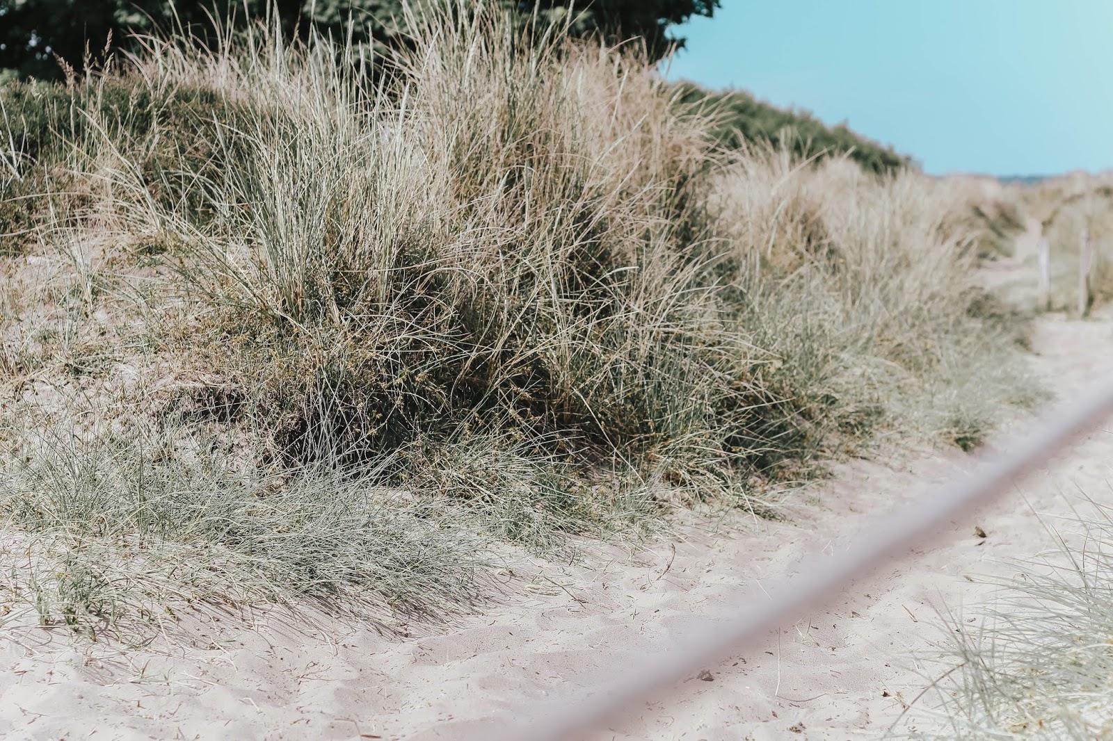 Studland Bay UK Beach Summer