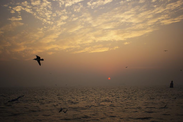 skywatch, sky, dawn, sunrise, sassoon docks, birds, arabian sea, mumbai , india,