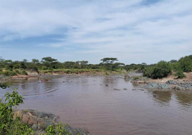 hippo pool nel parco serengeti