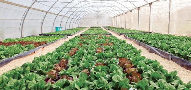 مواصفات البيوت المحمية الزراعية في السعودية