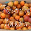 Outdoor and Gardening with Red Hill: Preserving Apricots
