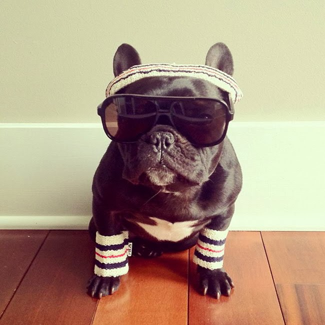 Funny French Bulldog | Interesting New Pictures | Funny