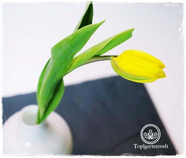 Gartenblog Topfgartenwelt Valentinstag: eine gelbe Tulpe in weißer Vase