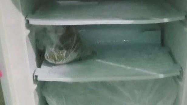Daging Menempel di Freezer