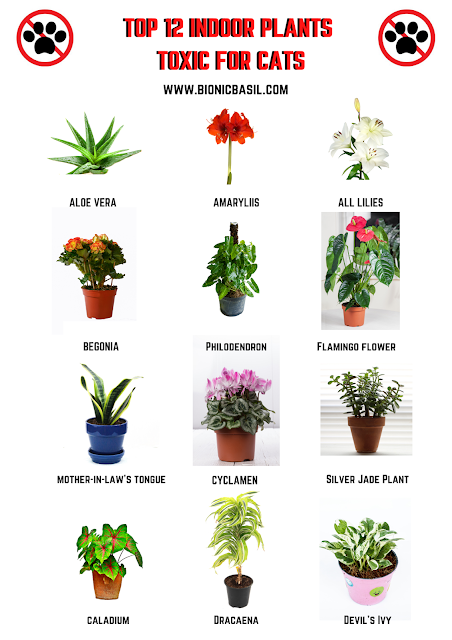 Top 12 Indoor Plants Toxic For Cats ©BionicBasil®