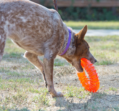 Bouncing rolling floating food toy for dogs