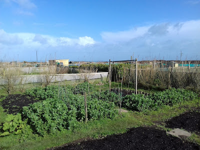 St Ives Cornwall - Allotment - March
