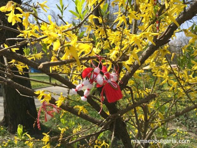 Martenitsa arbusto florido
