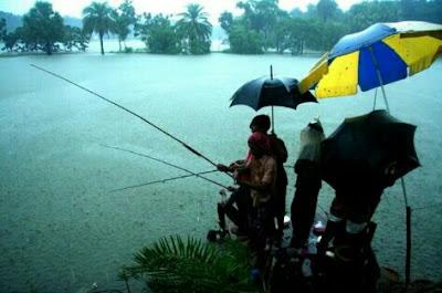 umpan ikan patin musim hujan