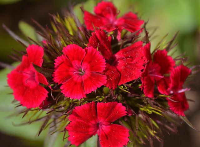 गुलाबी फूल