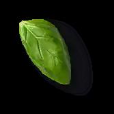 daun2